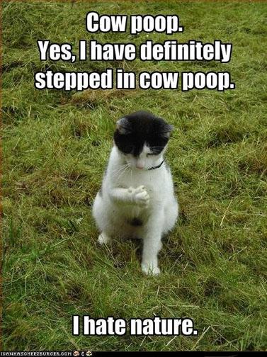 cow-poop[1]