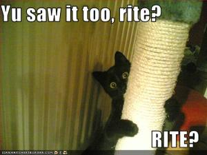 funny-pictures-cat-saw-something-scary