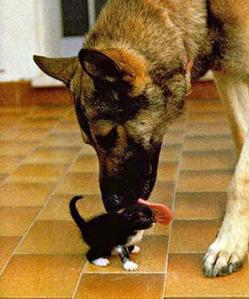 Big dog washing kitten - bathed in God's love